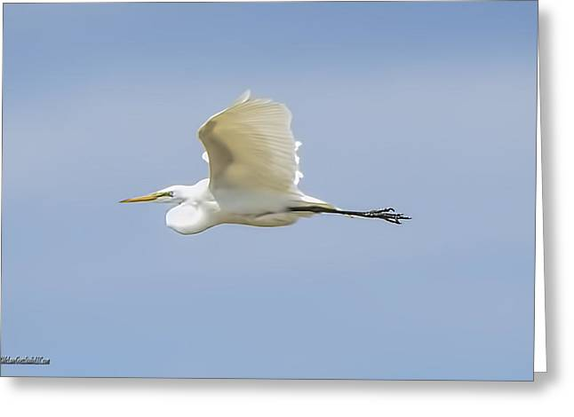 Snowy Night Greeting Cards - Egret in Flight II Greeting Card by LeeAnn McLaneGoetz McLaneGoetzStudioLLCcom