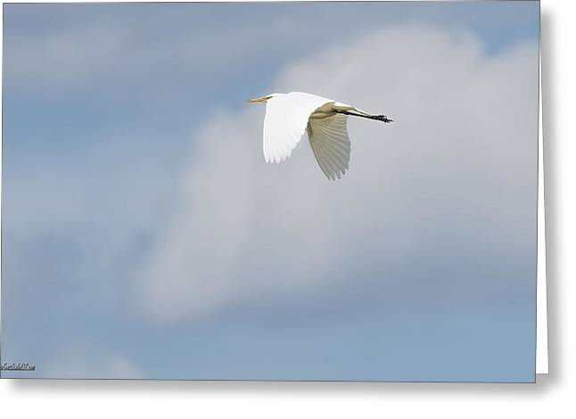 Snowy Night Greeting Cards - Egret in Flight Greeting Card by LeeAnn McLaneGoetz McLaneGoetzStudioLLCcom