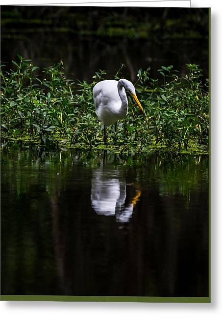 Wadingbird Greeting Cards - Egret looking for Lunch Greeting Card by Alicia Collins
