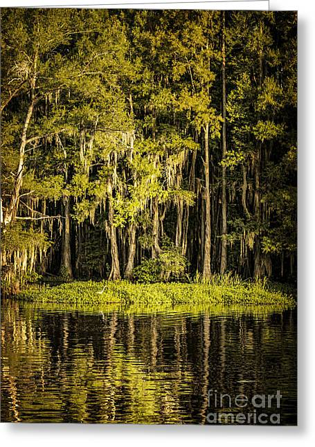 Egret On Caddo Lake II Greeting Card by Tamyra Ayles