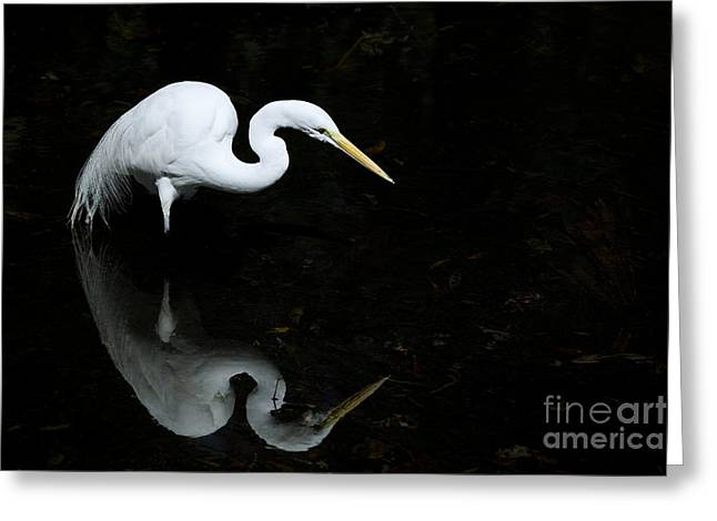 Concentration Greeting Cards - Egret Reflections Greeting Card by Dave Fleetham - Printscapes