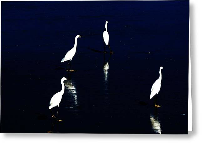 egret reflections Greeting Card by David Lane