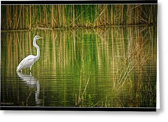 Snowy Night Greeting Cards - Egret Reflections Greeting Card by LeeAnn McLaneGoetz McLaneGoetzStudioLLCcom