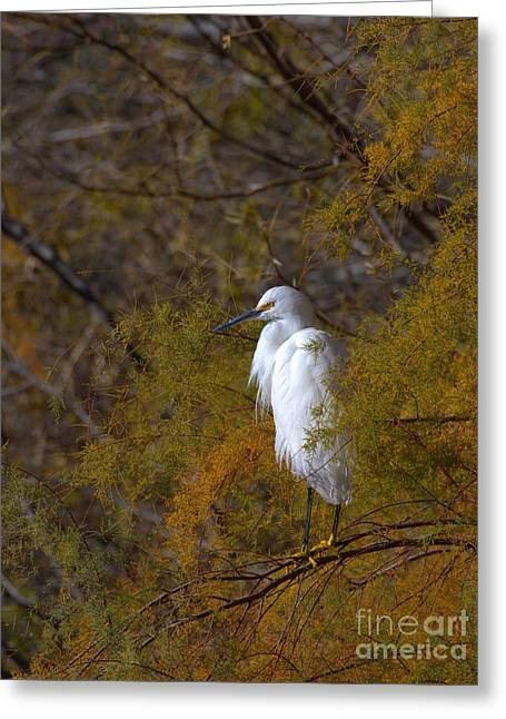 Ruth Jolly Greeting Cards - Egret surrounded by Golden leaves Greeting Card by Ruth Jolly