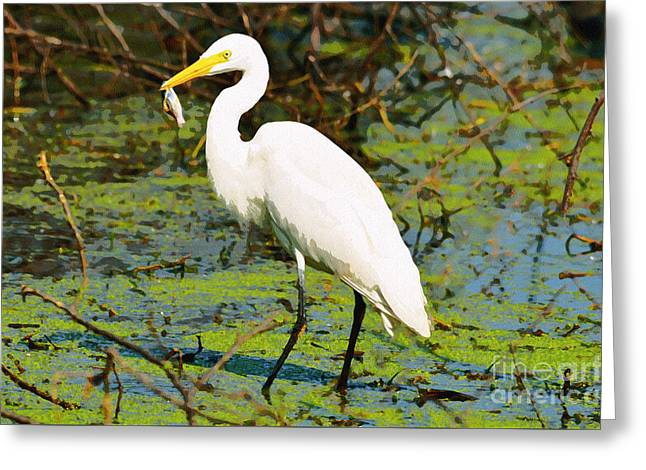 Egret With Fish  Greeting Card by Manjot Singh Sachdeva