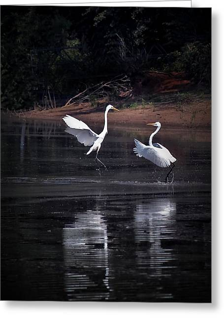 Lake Greeting Cards - Egrets VII I Told You I Have Headache Greeting Card by Gary Adkins