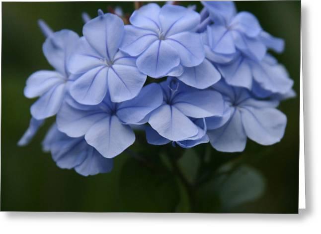 Tropical Photographs Digital Greeting Cards - Eia Au La e ke Aloha Blue Plumbago Greeting Card by Sharon Mau