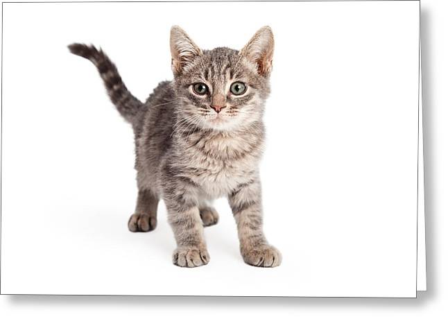 Cute Kitten Greeting Cards - Eight Week Old Playful Tabby Kitten Greeting Card by Susan  Schmitz