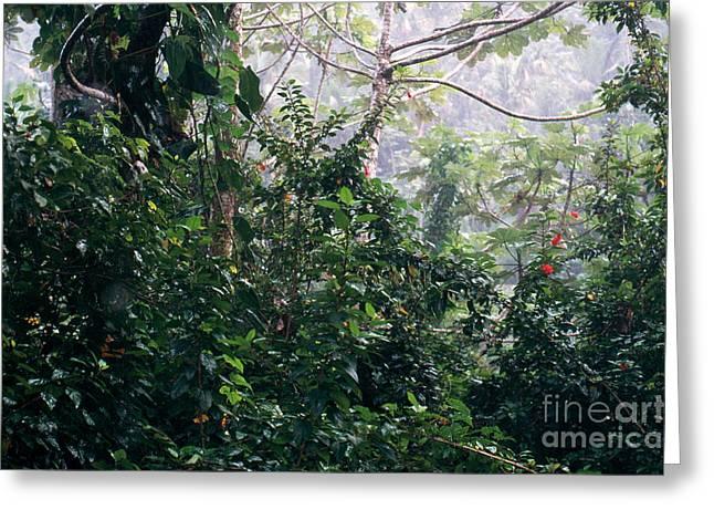 El Yunque Greeting Cards - El Yunque In The Rain Greeting Card by John Kaprielian