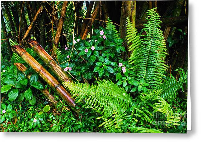 Puerto Rico Greeting Cards - El Yunque National Forest Ferns Impatiens Bamboo Greeting Card by Thomas R Fletcher