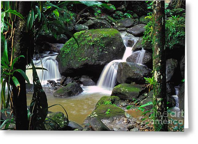 Verdant Greeting Cards - El Yunque National Forest Waterfall Greeting Card by Thomas R Fletcher