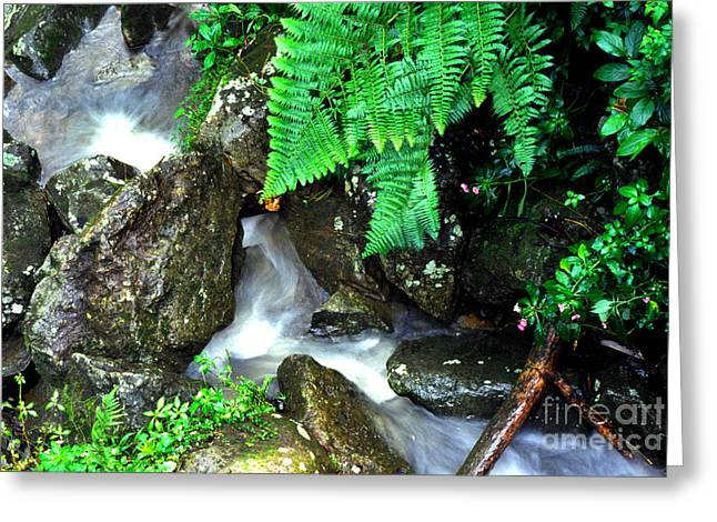 Puerto Rico Greeting Cards - El Yunque Rainforest Water Greeting Card by Thomas R Fletcher