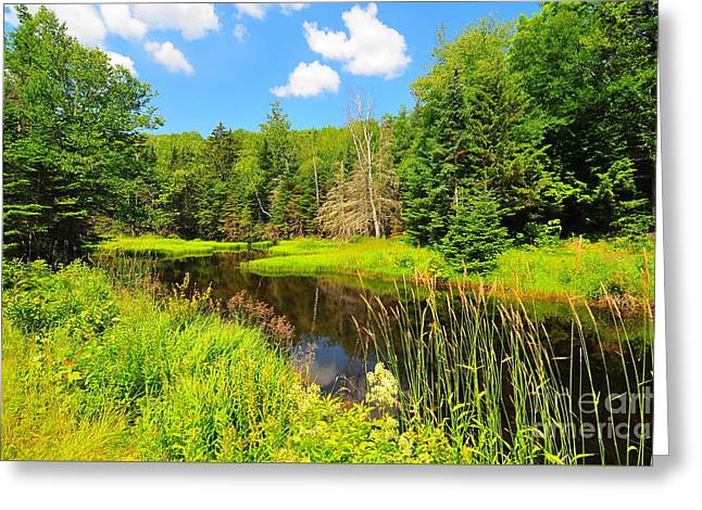 Carriage Road Greeting Cards - Elbow Pond Road  Greeting Card by Catherine Reusch  Daley