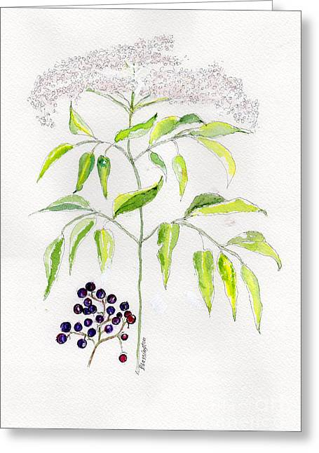 Elderberry Herb  Greeting Card by Doris Blessington