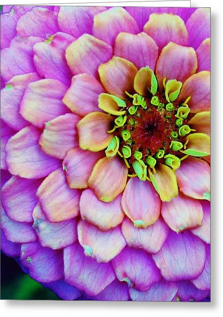 Zinna Greeting Cards - Electrifying Zinna Greeting Card by Bruce Bley