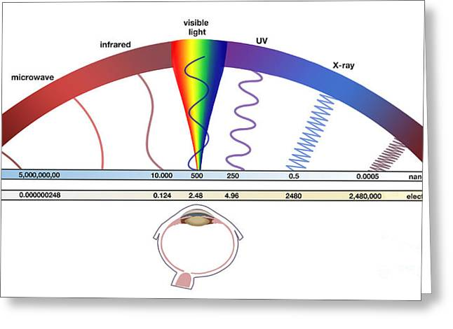 Component Greeting Cards - Electromagnetic Spectrum Greeting Card by Spencer Sutton