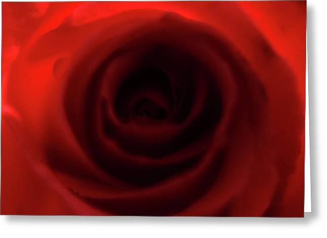 Elegant Rose Greeting Card by Bransen Devey