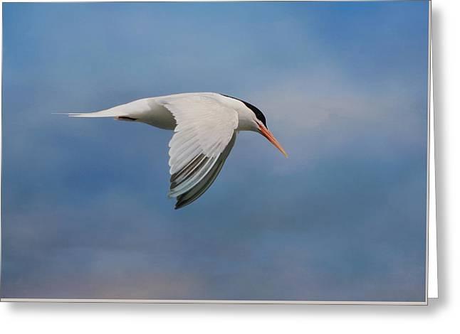 Elegant Tern Greeting Card by Fraida Gutovich
