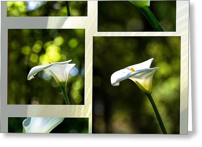 Mafra Greeting Cards - Elegant Translucent Lilies Greeting Card by Marion McCristall