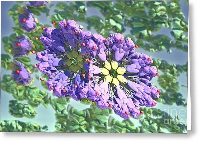 Renewing Greeting Cards - Elements of Spring Greeting Card by Jon Munson II