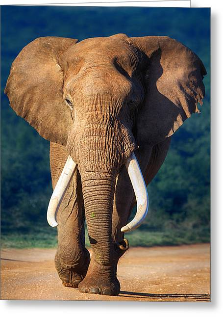 One Greeting Cards - Elephant approaching Greeting Card by Johan Swanepoel
