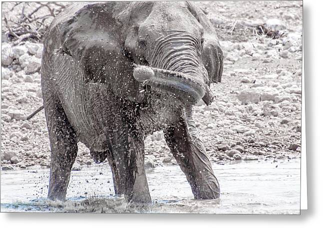African Heritage Greeting Cards - Elephant at Waterhole Greeting Card by Jacques Jacobsz
