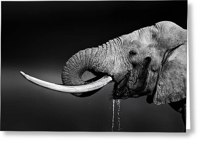 Elephant Bull Drinking Water Greeting Card by Johan Swanepoel