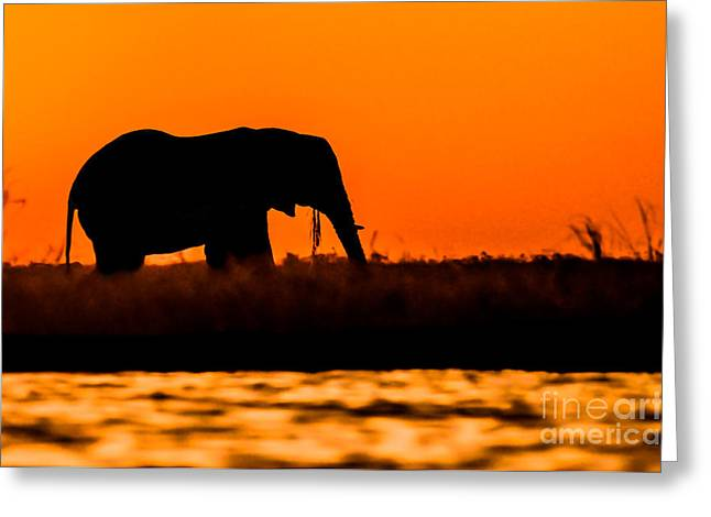 African Heritage Greeting Cards - Elephant Bull Silhouette on Sidudu Island. Greeting Card by Jacques Jacobsz
