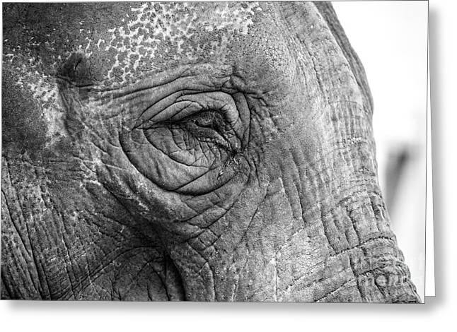 Eyebrow Greeting Cards - Elephant Greeting Card by Clare Bambers