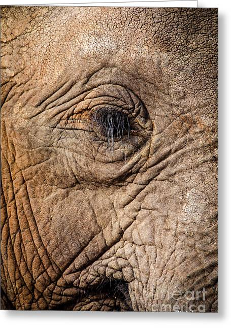 Elephants Eye Greeting Cards - Elephant Close Up 1 Greeting Card by Pat Lucas