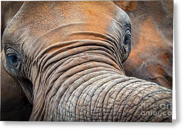 Elephants Eye Greeting Cards - Elephant Close Up 2 Greeting Card by Pat Lucas