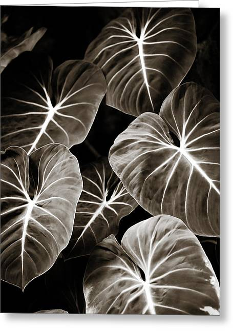 Elephant Ear Plant Greeting Cards - Elephant Ears on Parade Greeting Card by Marilyn Hunt
