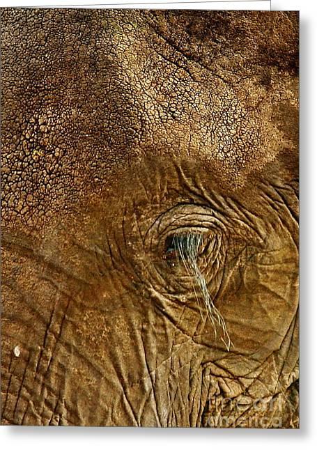 Eyelash Greeting Cards - Elephant Eyelash Greeting Card by Tom Cheatham