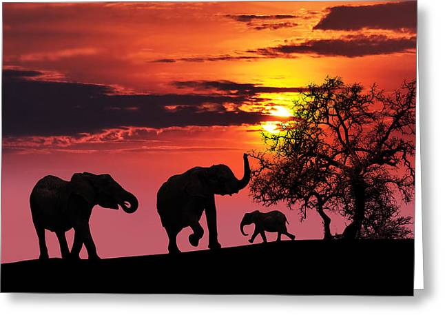 Sunset Zoo Greeting Cards - Elephant family at sunset Greeting Card by Jaroslaw Grudzinski