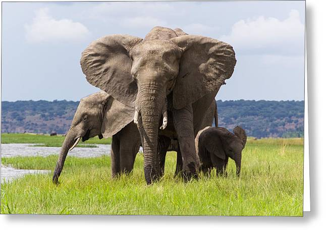 Social Herd Animals Greeting Cards - Elephant Family  Greeting Card by Joscelyn Paine