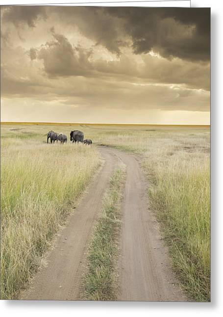 Large Format Animal Print Greeting Cards - Elephant Highway Greeting Card by Barry Aldridge