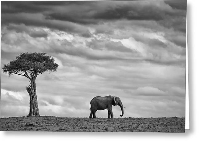 Kenya Greeting Cards - Elephant Landscape Greeting Card by Mario Moreno