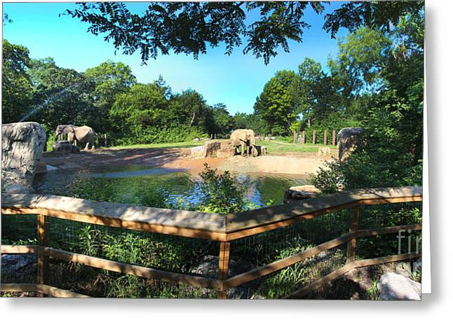 Elaphant Greeting Cards - Elephant Pano - KC Zoo Greeting Card by Gary Gingrich Galleries