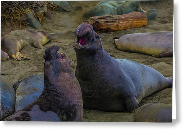 Elephant Seals Fighting On The Beach Greeting Card by Garry Gay