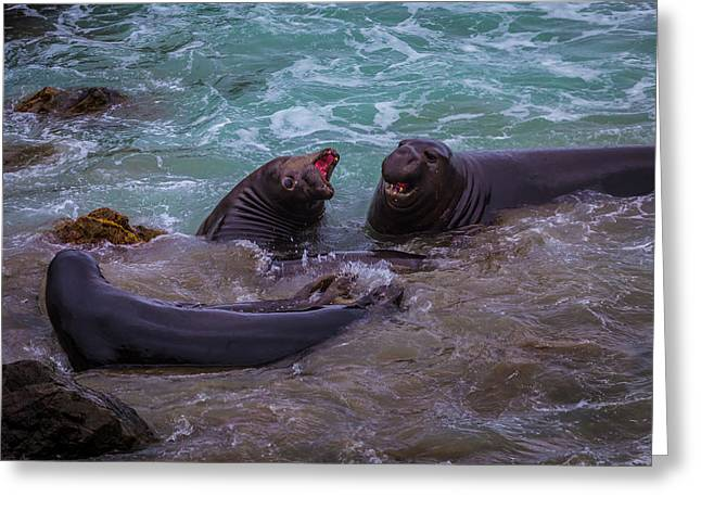 Elephant Seals In The Surf Greeting Card by Garry Gay