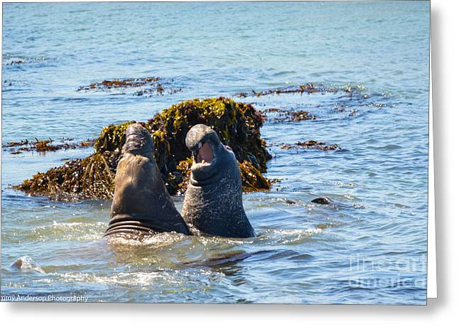 Elephant Seals Greeting Cards - Elephant Seals Greeting Card by Tommy Anderson