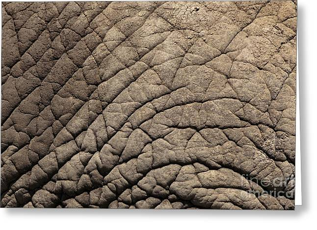 Zoo Greeting Cards - Elephant Skin Background Greeting Card by Edward Fielding
