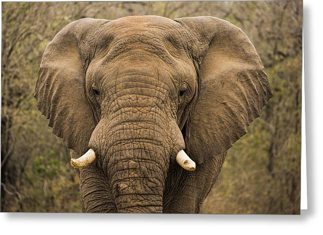 Game Greeting Cards - Elephant Watching Greeting Card by Stephen Stookey