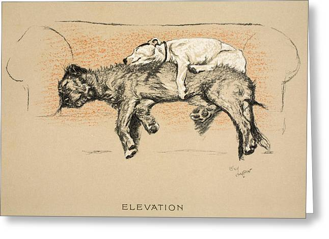 Elevation Greeting Card by Cecil Charles Windsor Aldin