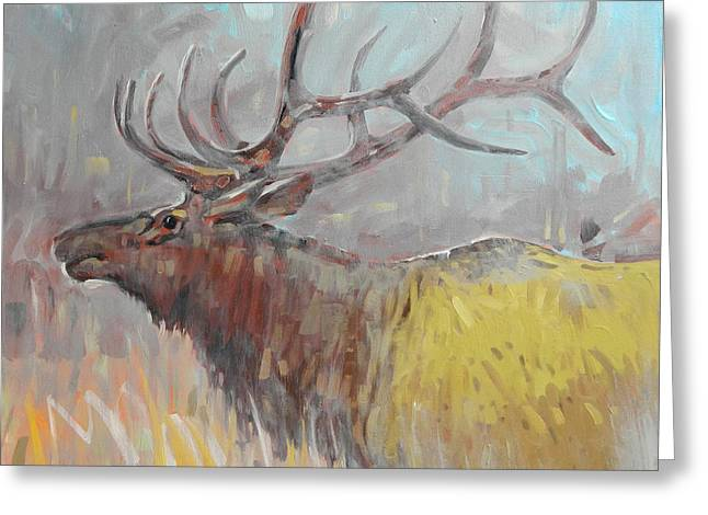 Elk Greeting Cards - Elk Greeting Card by Donald Maier