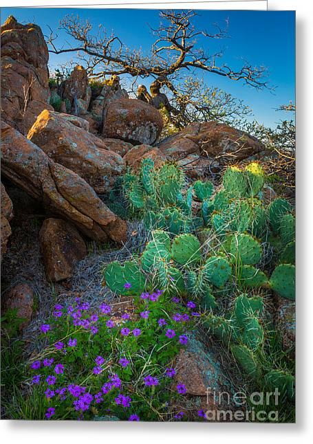 Elk Mountain Flowers Greeting Card by Inge Johnsson