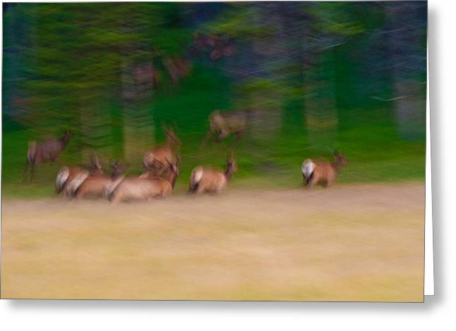 Motion Greeting Cards - Elk on the Run Greeting Card by Sebastian Musial
