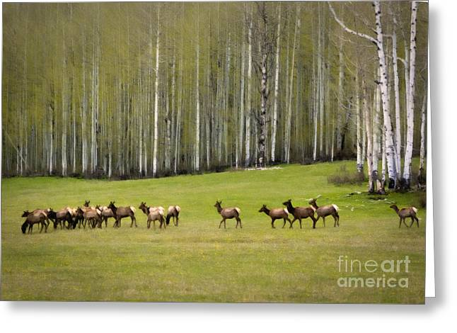 Enhanced Paintings Greeting Cards - Elk Spring Migration Greeting Card by Janice Rae Pariza