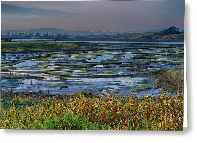 Grasslands Greeting Cards - Elkhorn Slough Greeting Card by Bill Roberts