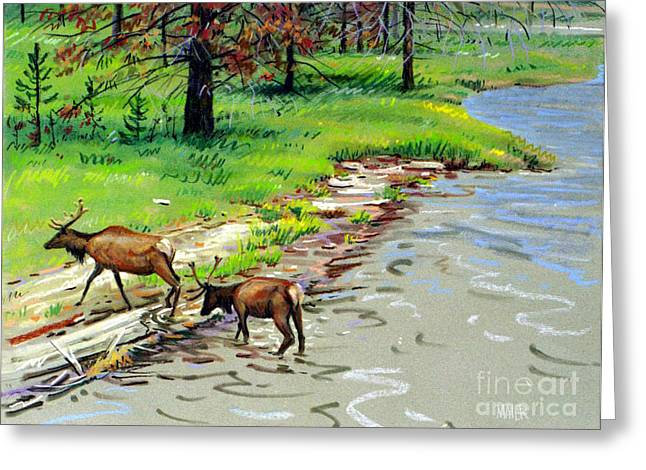 Elk Greeting Cards - Elks Crossing Greeting Card by Donald Maier